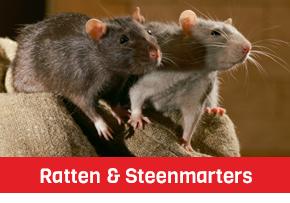 muizen ratten bestrijding