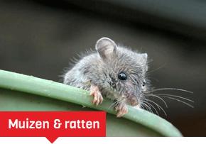 Muizen en ratten