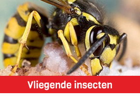 vliegende insecten vliegen wespen