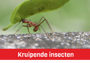 kruipende insecten mieren kevers